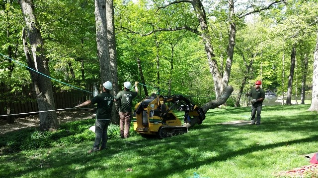 Tree Removal in Groveland May